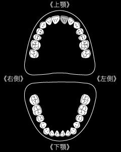 ogasahara001_000